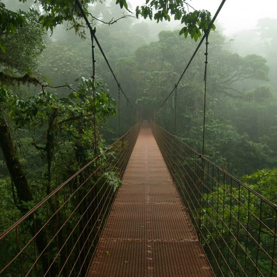 Monteverde Tours - What to do in Monteverde - Native's Way Costa Rica Tours & Transfers
