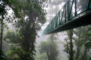 Hanging Bridges - Monteverde Cloud Forest Tour - Native's Way Costa Rica Tours
