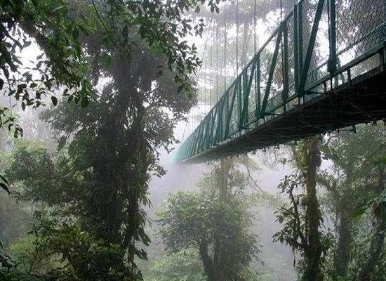 Hanging Bridges - Monteverde Cloud Forest Tour - Native's Way Costa Rica Tours