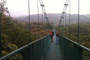 Monteverde Hanging Bridges - Monteverde Cloud Forest Tour - Native's Way Costa Rica Tours