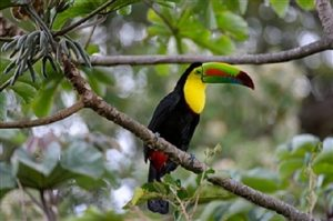 Toucan Costa Rica - Rincon de la Vieja Volcano National Park Tours - Native's Way Costa Rica Tours and Transfers