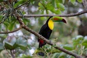 Toucan Costa Rica - Rincon de la Vieja Volcano National Park Tours - Native's Way Costa Rica Tours and Transfers