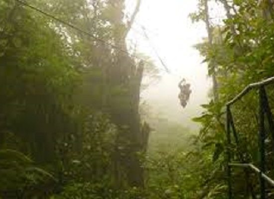 Zipline - Monteverde Cloud Forest Tour - Native's Way Costa Rica Tours