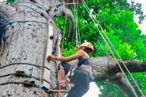 Tamarindo Zipline Tour - Native's Way Costa Rica - Tamarindo Tours and Transfers